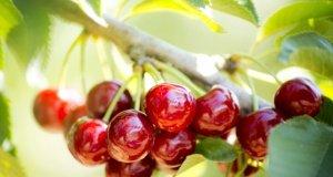 Tarım ürünleri ihracatında zirve el değiştirdi