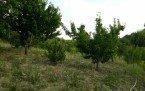 Demirci'de Satılık Arazi