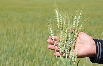 Tarım Potansiyelini Daha Etkin Kullanmalıyız