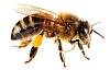 Arılar ısırdı can verdi
