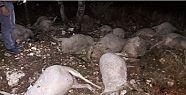 Yıldırım düştü 17 koyun can verdi