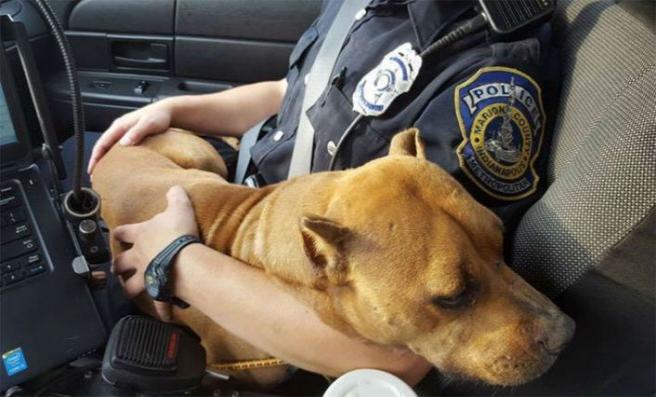 Hayvan Polisi Uygulamasına Veterinerlerden Destek