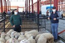 Kula'da Hayvan Pazarı, Tedbirlerle Yeniden Açıldı
