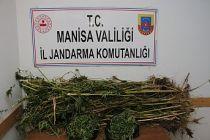 280 Kök Kenevir ve 1.200 gram esrar ele geçirildi, 2 kişi gözaltına alındı