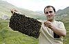 Anzer balının kilosu 850 Lira