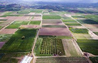İzmir, Manisa ve Uşak'ta Toplam 45 bin 564 Hektar...