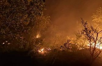 5 Dönüm Meşe Ormanı Alevlere Teslim Oldu