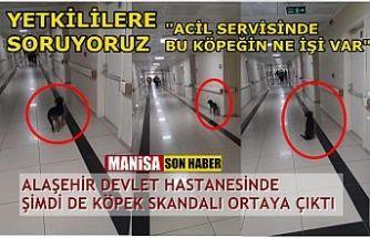"""Alaşehir Devlet Hastanesinde şimdi de """"Köpek Skandalı"""" ortaya çıktı"""