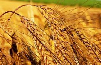 Tarım- ÜFE Yüzde 19 Arttı