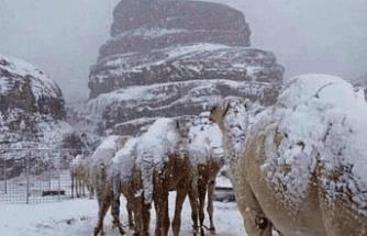 Develere Kar Sürprizi
