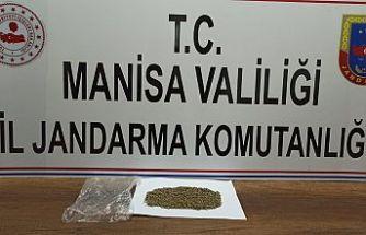 Jandarma Operasyonu! 20 gram Bonzai ele geçirildi