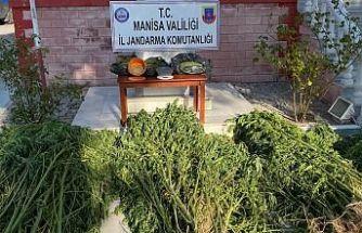 Uyuşturucu Madde İmal ve Ticareti ile Yasadışı Ekim Ortaya Çıkarıldı