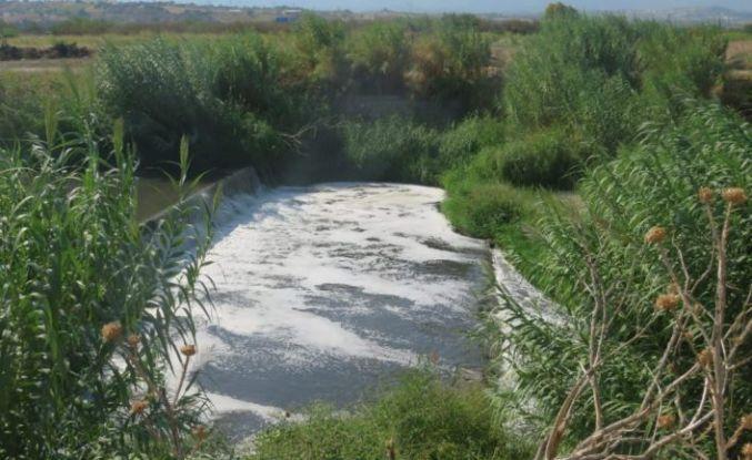 Nif çayına atılan kimyasal  atıklar bitki örtüsü ve hayvanlara zarar veriyor
